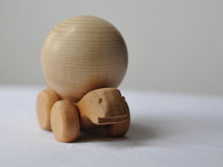 Tommy, die Schildkröte:        Wie alle Schildkröten ist Tommy sehr geduldig, bewegt sich gemächlic